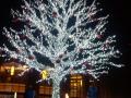 Tree-1-1000x500